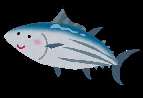 2015021920fish_katsuo_